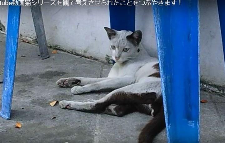 つぶやきーyoutube猫動画