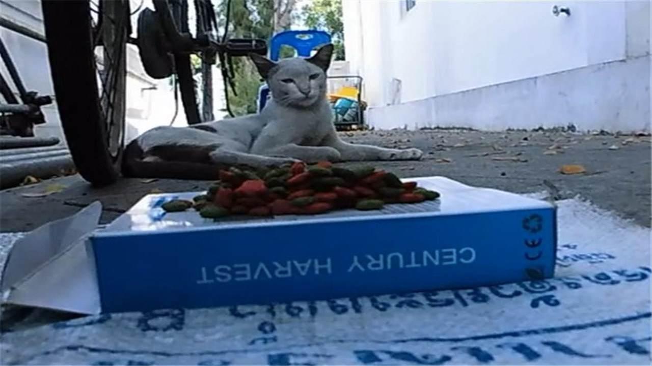 キャットフードを食べない先輩野良猫