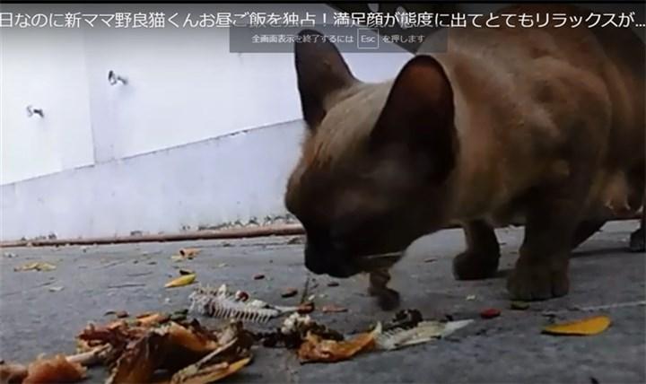 新ママ野良猫昼ごはん