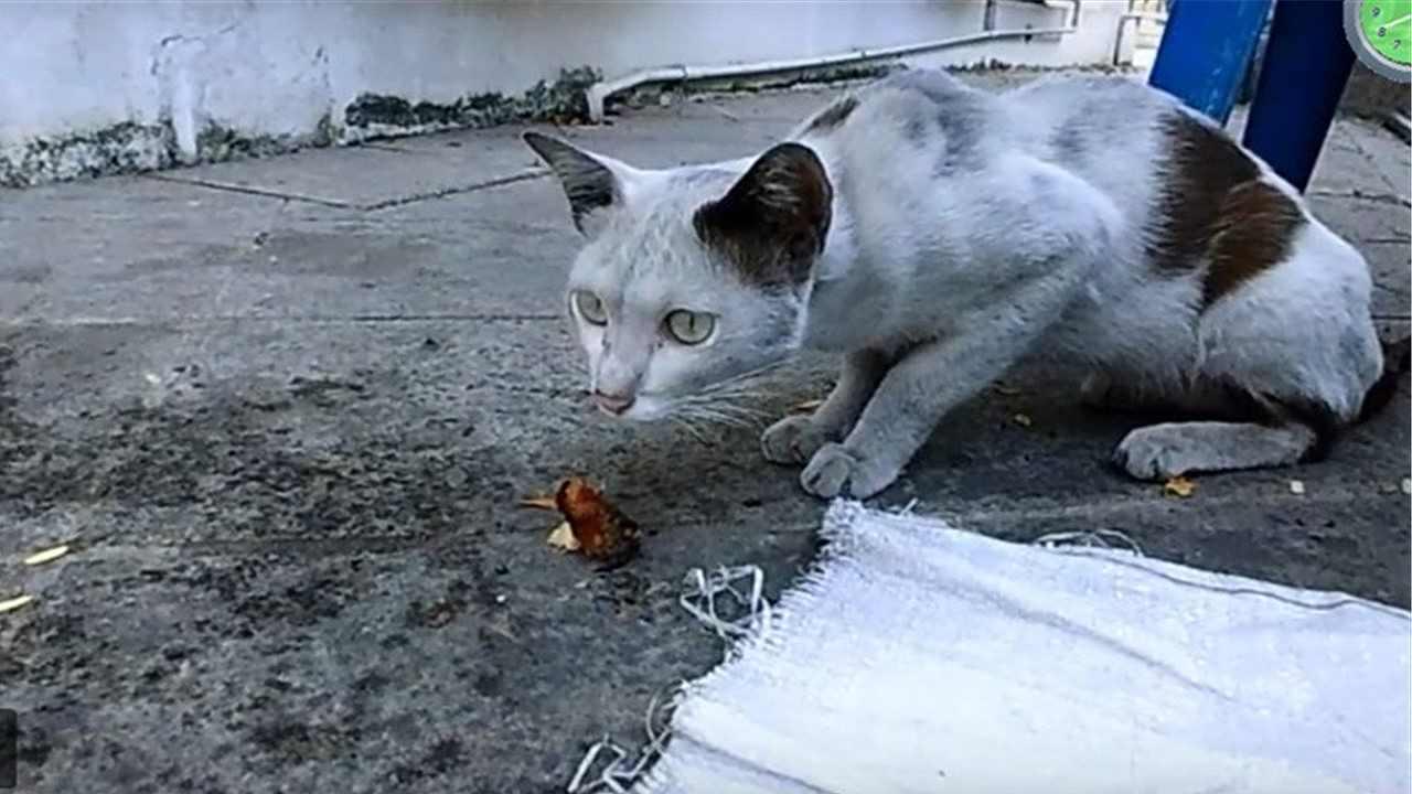 第3の野良猫2