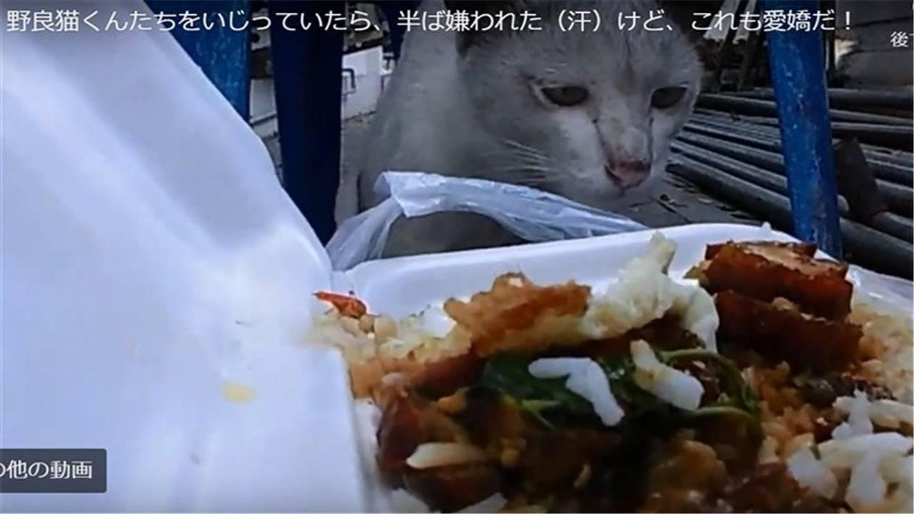 野良猫くんがわたしの昼ごはんを食べたがっている
