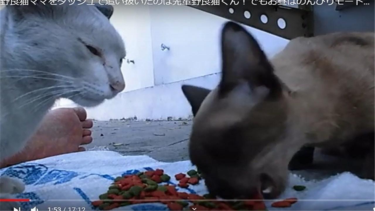 ガツガツ食べる野良猫ママ